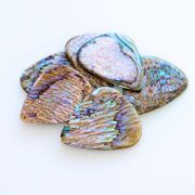 Abalone Tones - Paua - 1 Guitar Pick | Timber Tones